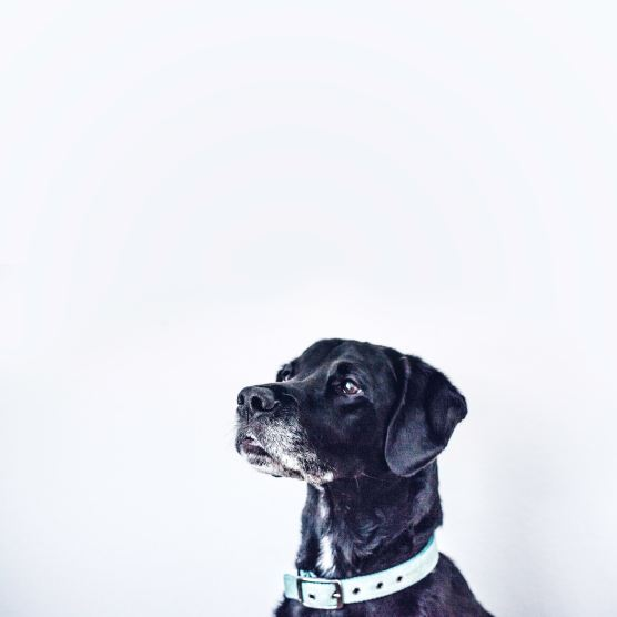 OLD DOG ken-reid-290754-unsplash